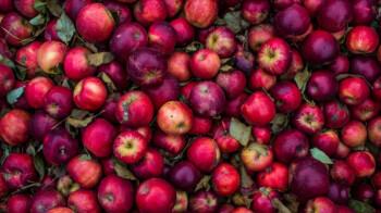 Hombre pide manzanas en un supermercado y obtiene un Apple iPhone SE gratis (2020)